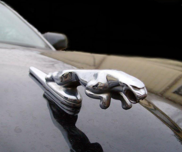 You haven't lived until you've nutted on a Jaguar hood ornament traveling 40mph.